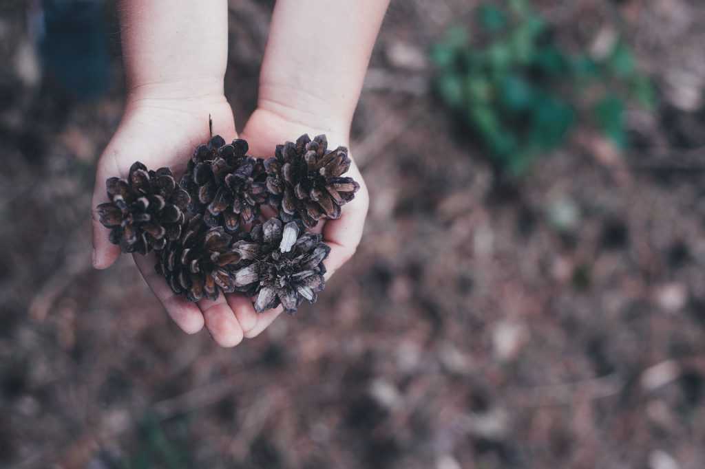 aerial view of child's hands holding pine cones