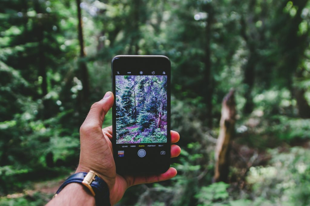 photo of hand holding smartphone with camera app open to take a photo of the forest