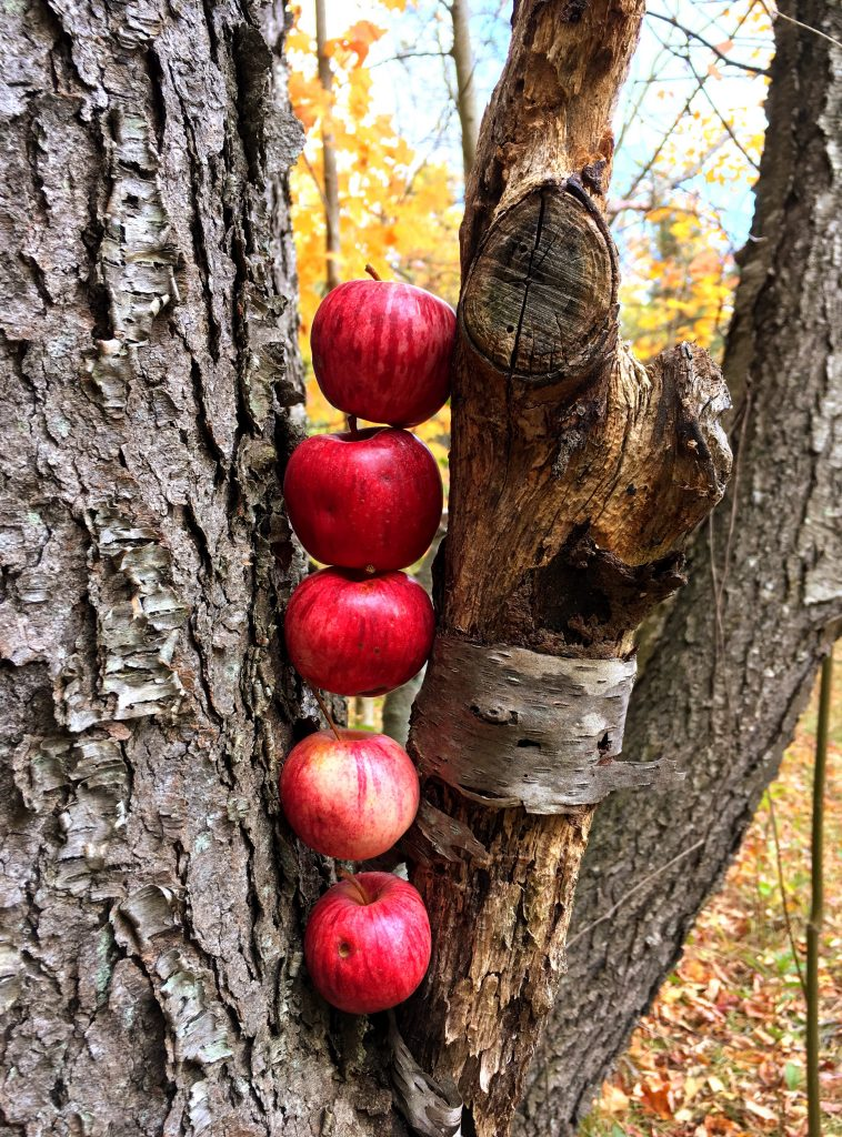 five red crab apples stacked in a tree