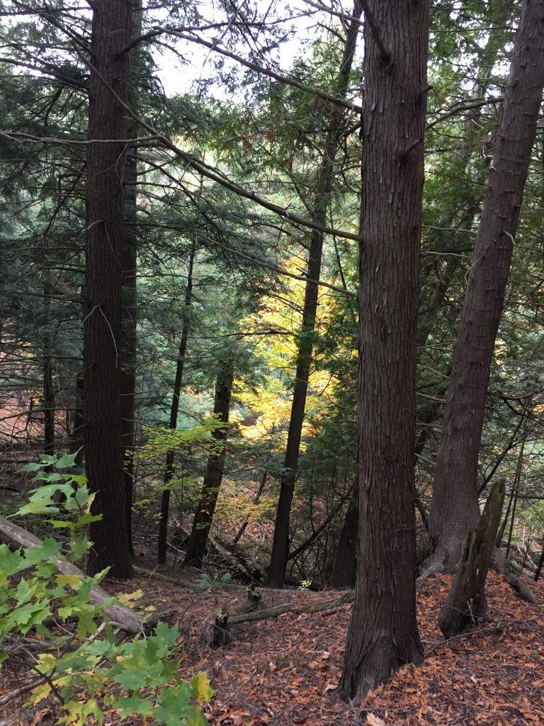photo of a forest ravine