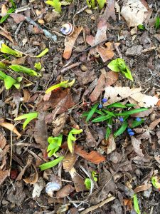 shoots of green plants growing through fallen leaves