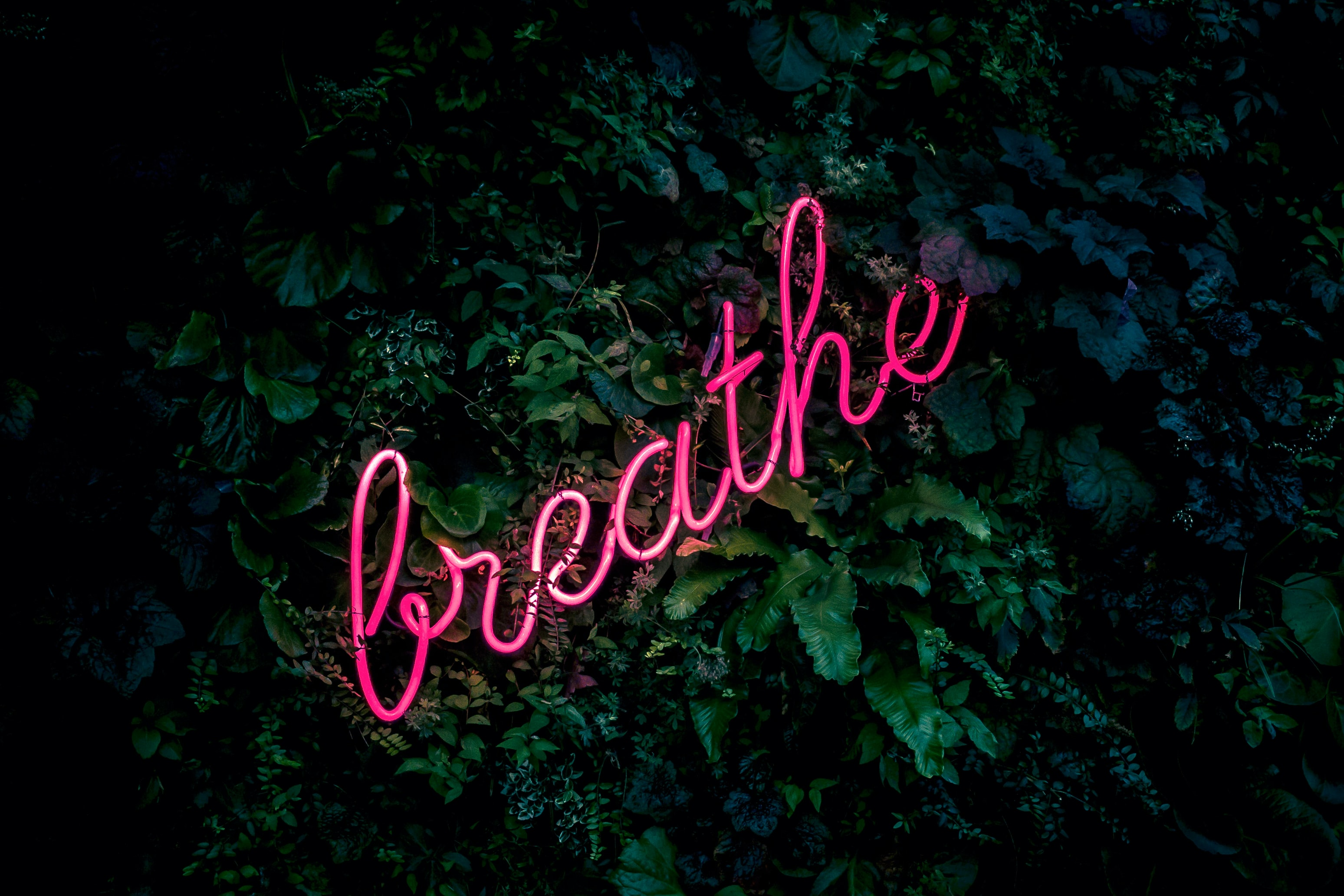 "Neon pink sign that says ""breathe"" in front of wall of ivy"